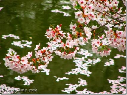 Petals over water