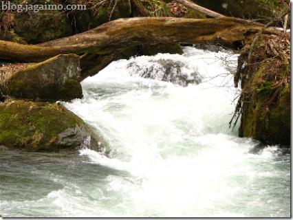 Stream, fallen tree